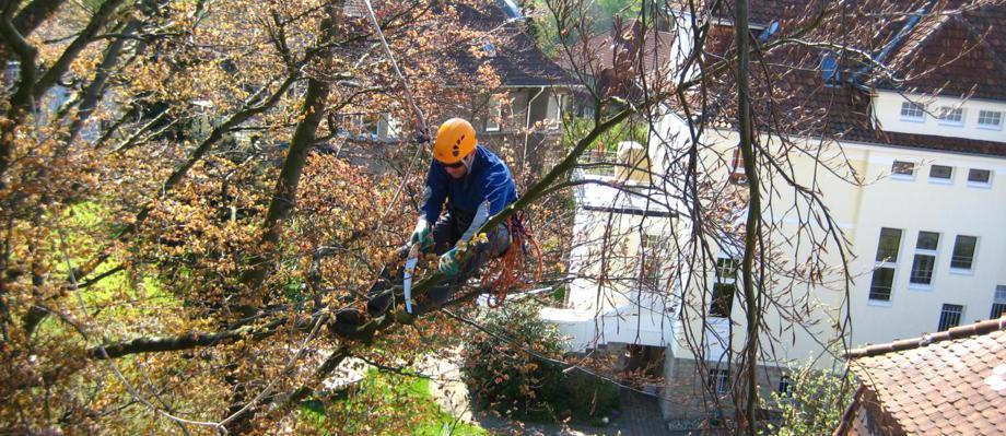 Baumschnitt vorher nachher for Hydrokultur buro